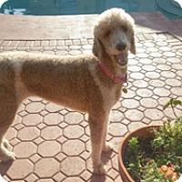 Adopt A Pet :: ELECTRA - Melbourne, FL