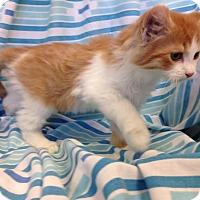 Adopt A Pet :: Arthas - Larned, KS