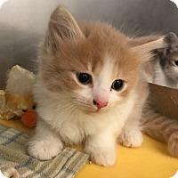 Adopt A Pet :: Adrian - Hendersonville, NC
