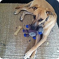 Adopt A Pet :: Mary- Gentle Sweetheart! - Los Angeles, CA