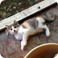 Adopt A Pet :: Cutie Pie - Winter Haven, FL