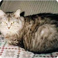 Adopt A Pet :: Sophie - Toronto, ON