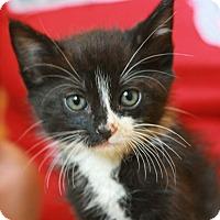 Adopt A Pet :: Rosa - Canoga Park, CA