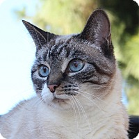 Adopt A Pet :: Sophie - Laguna Woods, CA