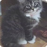 Adopt A Pet :: Carey - Colmar, PA