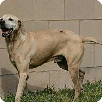 Adopt A Pet :: Smiley Jack - Lufkin, TX