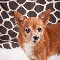 Adopt A Pet :: Buddy - Elizabethtown, PA