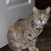 Adopt A Pet :: Oshi - Hayes, VA