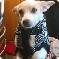 Adopt A Pet :: Snow White - Santa Ana, CA
