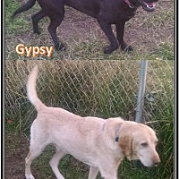Adopt A Pet :: Gypsy and Gold Buster - Cat Spring, TX