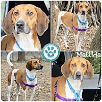 Adopt A Pet :: Matilda - Kimberton, PA