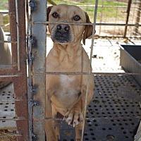 Adopt A Pet :: Yellow Boy - E. Greenwhich, RI