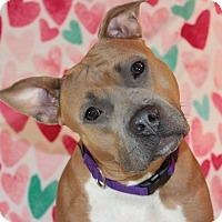 Adopt A Pet :: Trudy - Shrewsbury, NJ
