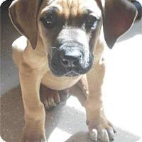 Adopt A Pet :: Copper - Waupaca, WI