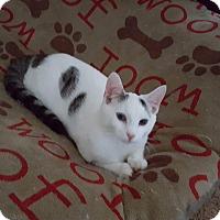 Adopt A Pet :: Kung Pao - Garner, NC