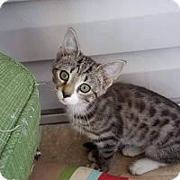 Adopt A Pet :: Zelda - Millersville, MD