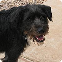 Adopt A Pet :: Jack - Groton, MA