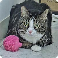 Adopt A Pet :: Sugar - Chambersburg, PA