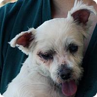 Adopt A Pet :: Ariel - Palmdale, CA