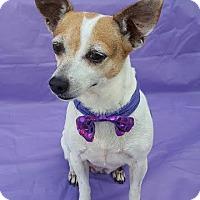 Adopt A Pet :: Joyelle - Wellington, FL