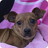 Adopt A Pet :: Priscilla - New Boston, NH