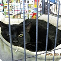 Adopt A Pet :: Spooky - West Dundee, IL