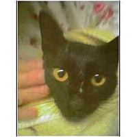 Adopt A Pet :: Moon - Owasso, OK