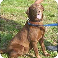 Adopt A Pet :: Agatha - Cumming, GA