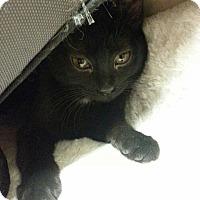 Adopt A Pet :: Cecelia - West Dundee, IL