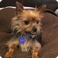Adopt A Pet :: Kingsley - Ashland City, TN