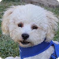 Adopt A Pet :: Tyler - La Costa, CA