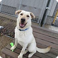 Adopt A Pet :: Hudson - Meridian, ID