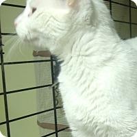 Adopt A Pet :: ROXY - Acme, PA