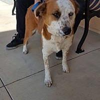 Adopt A Pet :: Dawn - Fresno, CA