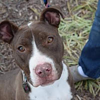 Adopt A Pet :: Riblett - Dallas, GA