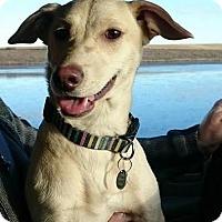 Adopt A Pet :: Poppy - Saskatoon, SK