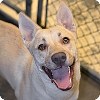 Adopt A Pet :: Daisy - Greensburg, PA