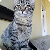 Adopt A Pet :: Alida - Newport, KY
