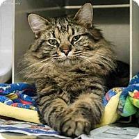 Adopt A Pet :: OWEN - Anchorage, AK