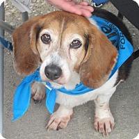 Adopt A Pet :: Sadie - Rootstown, OH