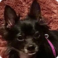 Adopt A Pet :: Ori - Washington, PA