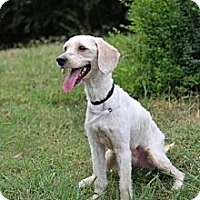 Adopt A Pet :: Teddy - Knoxville, TN