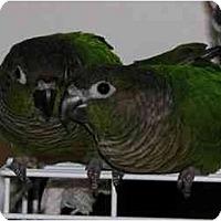 Adopt A Pet :: Moncho & Bonita - Salt Lake City, UT