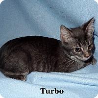Adopt A Pet :: Turbo - Bentonville, AR