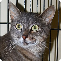 Adopt A Pet :: Abby - North Branford, CT