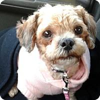 Adopt A Pet :: Ginger - Toronto, ON