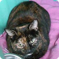 Adopt A Pet :: Bethel - Franklin, NH