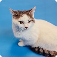 Adopt A Pet :: Cookie - Lexington, KY