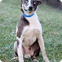 Adopt A Pet :: Xenos Adoption Pending - Waldorf, MD
