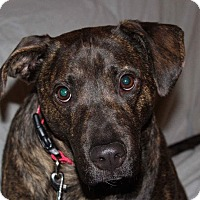 Adopt A Pet :: Brody - Toms River, NJ